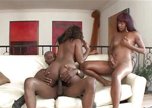 One black beauties banged by a bestial